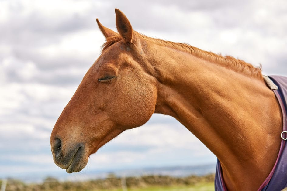 Horse at Low Ash Stables by GC-Photography